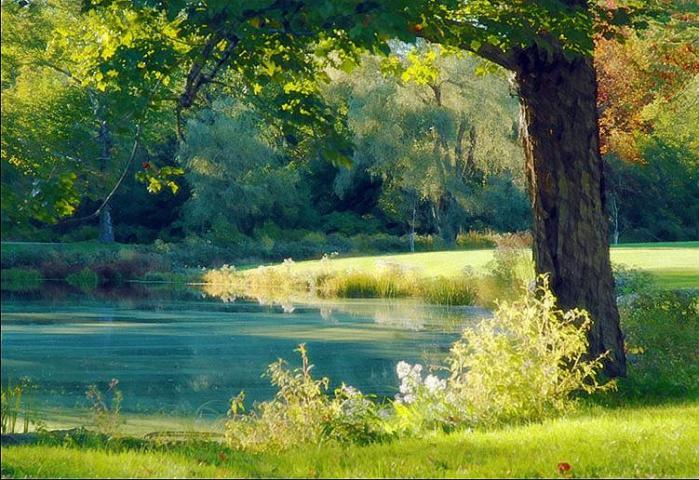 quiet-pond